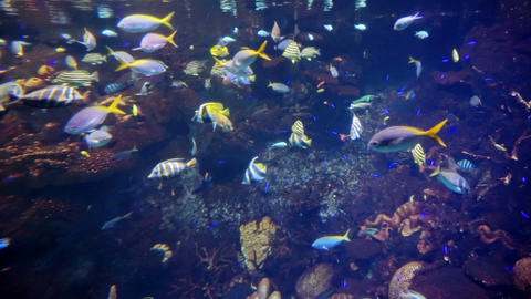 Video of Tropical Coral reef with fishes swimming Footage