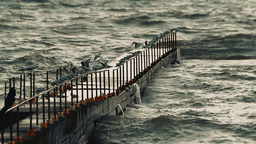 Seagulls sitting in a row on the handrail of the breakwater and hunt down the fi Footage