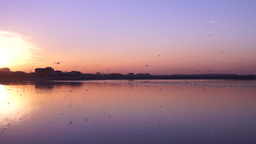 Picturesque sunset with flock of flying birds mirrored on the lake Footage