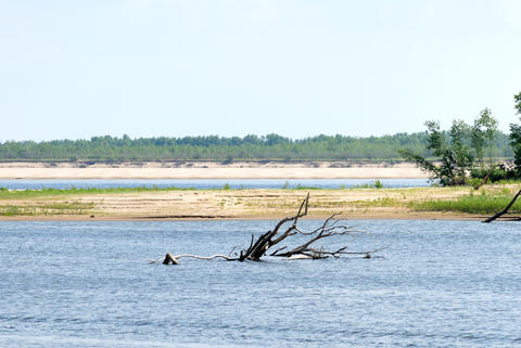 Wood on river coast Photo