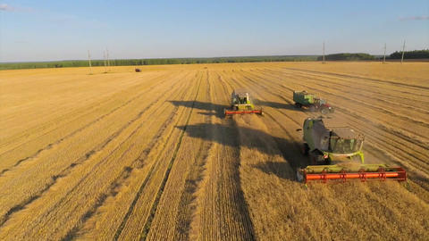 The work combines and tractors harvesting wheat in the autumn Live Action