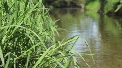 Green herbs near a stream 95 Footage