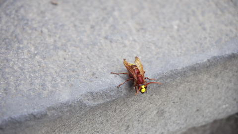 Red Wasp Isolated on a Stone Wall Fotografía