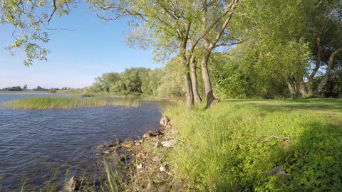 Calm and beautiful nature scene with lake and sunshine Live Action