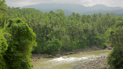 exotic jungle with palm trees Stock Video Footage