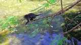 monkeys in uluwatu temple, bali Footage