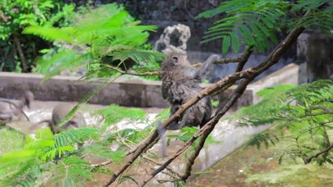 monkeys in uluwatu temple, bali Stock Video Footage