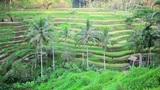 Tegalalang rice terrace, bali, indonesia Footage