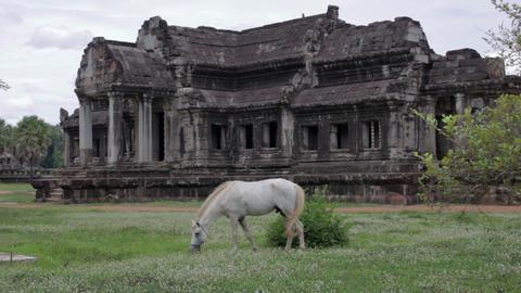 Horse rental in Angkor Wat Stock Video Footage