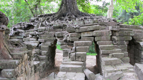 huge tropical tree growing over stones Stock Video Footage