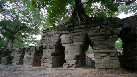 huge tropical tree growing over stones Stock Video Footage