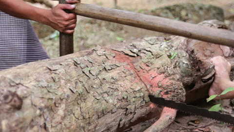 cutting tree with saw Stock Video Footage