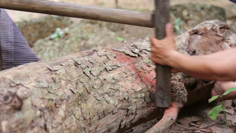 cutting tree with saw Footage