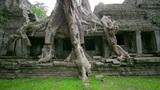 huge tropical tree covers building Footage