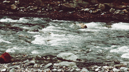 Video - Panning view of rough mountain river in winter, Caucasus ビデオ