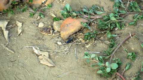 Small solitary wasp in the sand Footage