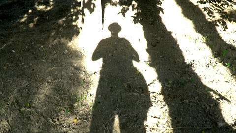 Pan across beautiful lime tree. the long shadow of the trunk of a palm tree. the Footage