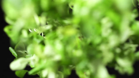 Fresh greens falls down in slow motion, food in super slow motion, high frame Footage
