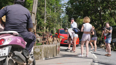Tourists Feeding Wild Monkeys and Taking Photos in Tropical Jungle Park. Phuket Footage
