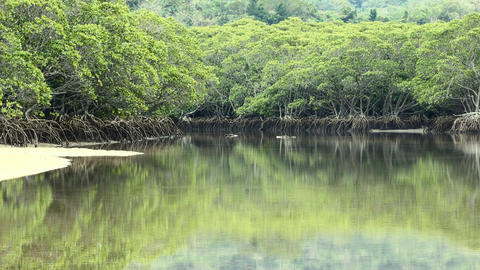 Tilting up from mangrove reflections on clear water Footage