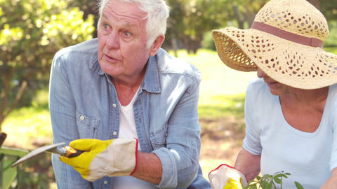 Grandparents gardening with shovel Footage