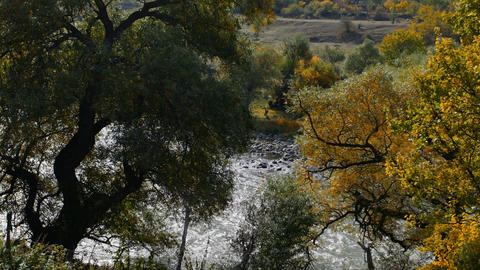 Fast mountain river flows. View thru the trees Footage
