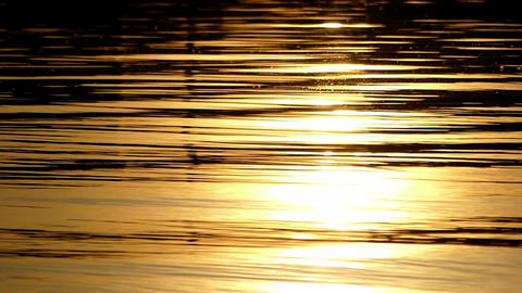 The golden looking waters of a lake at a gorgeous sunset Footage