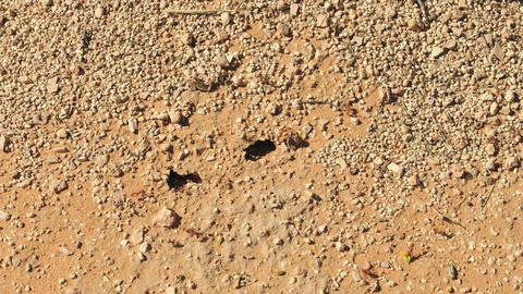 Ants on hill timelapse Live Action
