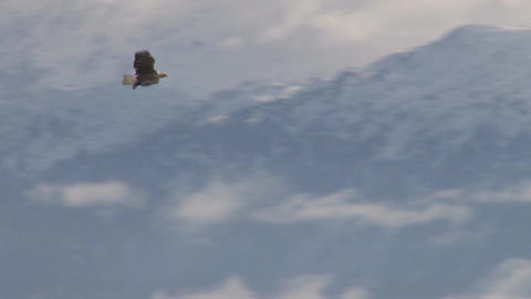Bald eagle soaring over mountains through clouds Live Action
