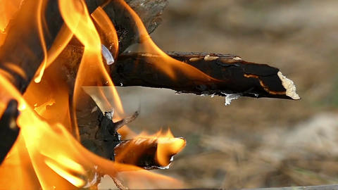 A dragon looking branch burns on a campfire in slow motion Footage