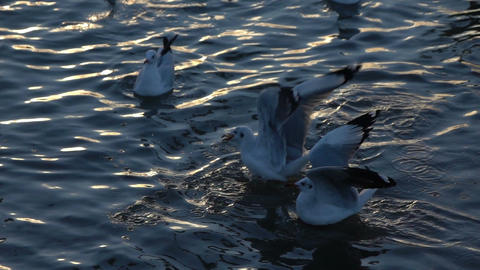Seagull birds flying above the surface water sea slow motion Footage