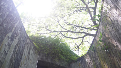 Tree above the tunnel is a brick walkway at park ビデオ