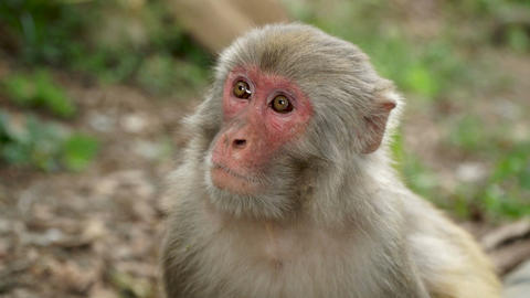 Portrait of a monkey in the jungle Footage