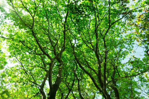 Ant eyes view under the tree in daylight フォト