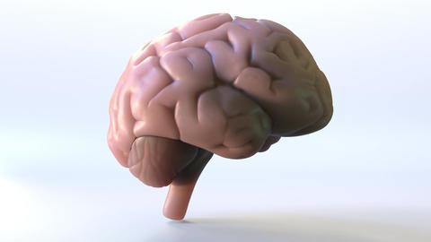 Rotating human brain loopable animation 画像