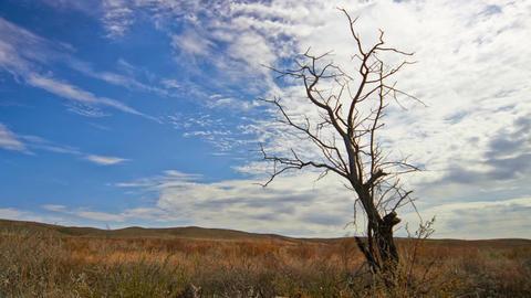 Dead Tree Against Cloudy Sky Footage