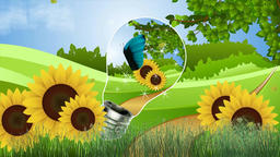 Nature butterfly sunflowers Animation