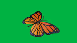 Green screen butterfly Animation