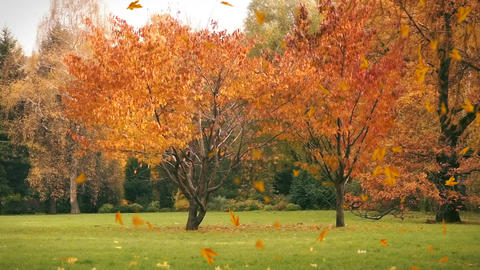 Autumn leaves fall on the grass, background Footage