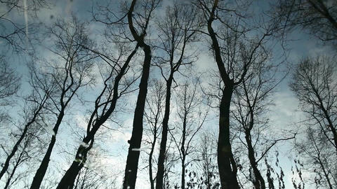 Clouds and bare trees flicker reflection Footage