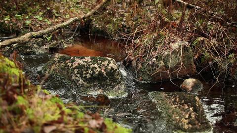current creek murmur Footage