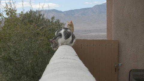 Cats on balcony ledge Live Action