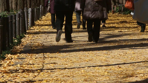 People walking in the fallen leaves of Ginkgo Footage
