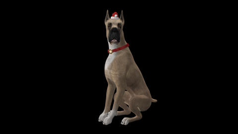 Dog Greeting for Winter Holidays - Great Dane - Transparent with Sound Animation