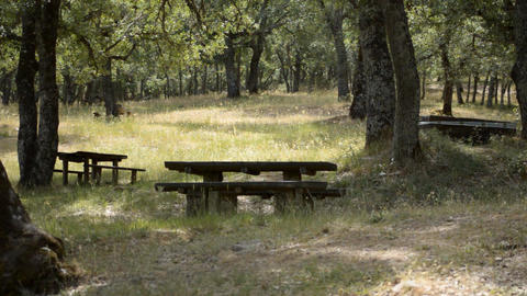 Picnic Tables In The Forest Empty To Use Footage