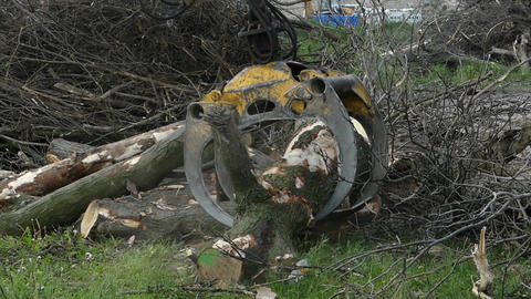 A metallic crane arm grabs logs on a river bank in slow... Stock Video Footage
