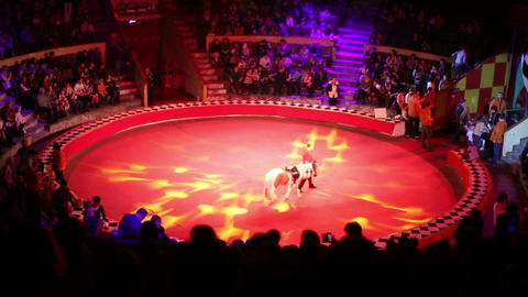 The circus ring and the audience Live Action