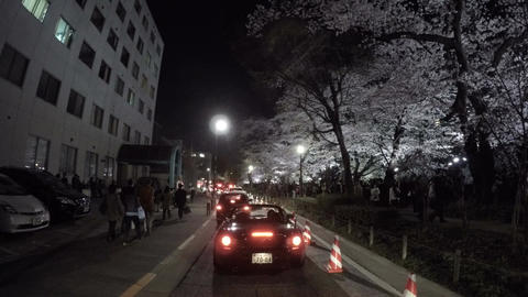 Crowd of people and cars gathering to view the illuminated cherry blossoms surro Footage
