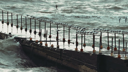 Video - Seagulls sitting on the railing of the old pier in search of food during Footage