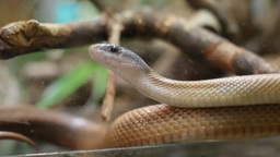 Crawling snake Stock Video Footage